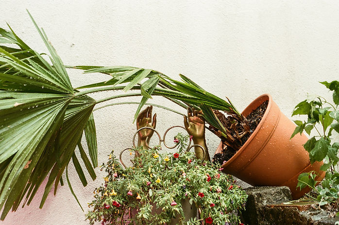 Copy of backyard-plant.jpg