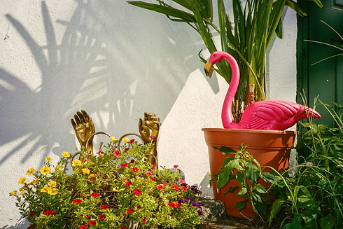Copy of backyard-plant-02.jpg