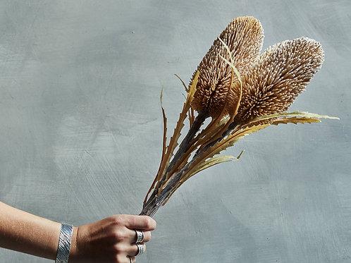 Banksia (cinnamon) per stem