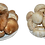 Thumbnail: Duo Cogumelos Shiitake+Paris
