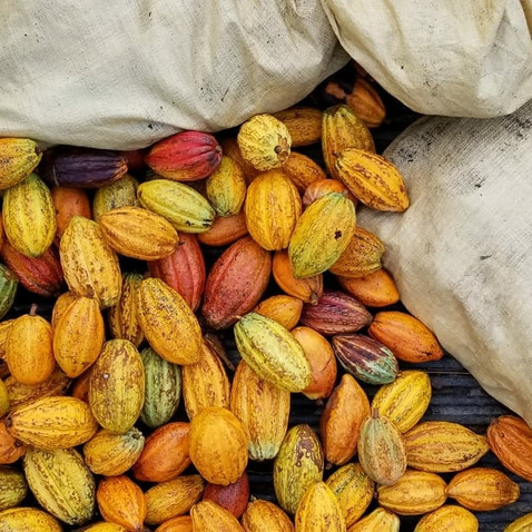 Cacao Tours