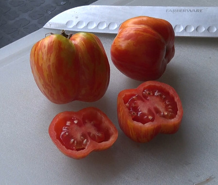 Here is the Schimmeig Striped Hollow Tomato Solanum lycopersicum. This hollow tomato is a striped version of the hollow stuffing tomato. Fruits can get to 5 inches big but don't weigh as much as regular tomatoes because it is hollow! Plants can be highly productive and can get to 10 feet tall. Perfect for stuffing just like stuffing a pepper. Open pollinated Indeterminate 75 days.