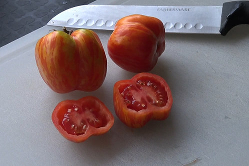 Here is the Schimmeig Striped Hollow Tomato Solanum lycopersicum. This hollow tomato is a striped version of the hollow stuff