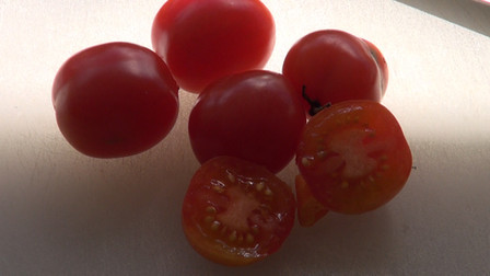"""The Riesentraube tomato,Solanum lycopersicum is originally from Germany. Name translates as """"giant bunches of grapes."""" Introduced commercially in the U.S. in 1994 by Southern Exposure Seed Exchange. High-yielding plants. Tasty 1"""" fruits are borne on large sprays and shaped like beaked plums. Indeterminate, Open pollinated65-75 days from transplant."""