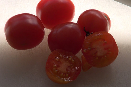 """The Riesentraube tomato,Solanum lycopersicum is originally from Germany. Name translates as """"giant bunches of grapes."""" Intro"""