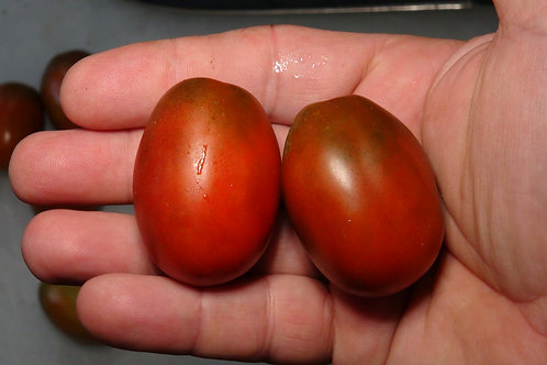 Here is the Black Dragon Tomato , Solanum lycopersicum. The origins of this tomato is unknown at this time. The black Dragon