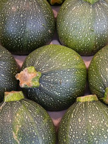 Here is the Round De Nice zucchini, Cucurbita pepo This is a French heirloom squash that dates back to the 1700's. It is a ro