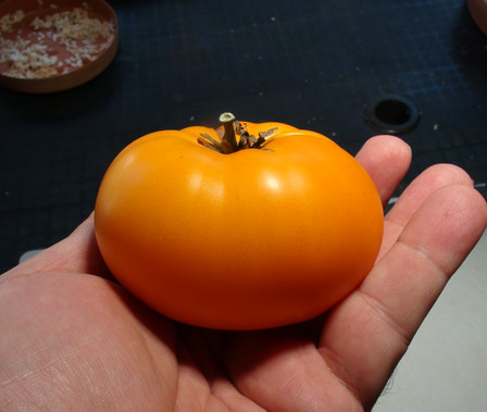 Here is the Yellow Brandywine Tomato, Solanum lycopersicum. The origins of this tomato is unknown but is believed to come from the USA in 1991. This beefsteak tomato has a deep yellow-orange skin with a orange flesh inside getting to about 3.5 inches round and weighting around 19 oz. The thing about this variety is for such a well known variety is it does not have a real history! Plants can get to 8.5 feet tall in really good soil but plants tend to get to 6 feet tall. The fully ripened fruits will have a deep rich color to them. Great tasting tomatoes for salads, eating fresh and for tomato sauce and paste! Open pollinated indeterminate potato leaf mid to late season 70 to 90 days.