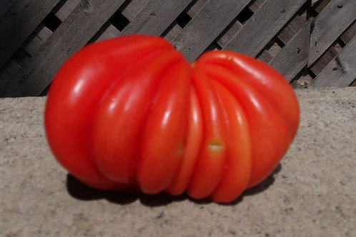 Here is the Pink Accordion Tomato, Solanum lycopersicum. A very oddly shaped pink tomato, beautiful, 1 pound, dark-pink tomat
