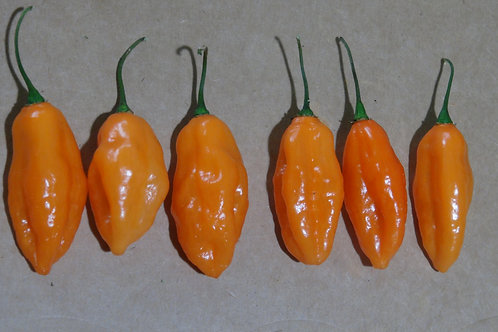 Here is the Peach Piments Habanero Pepper, Capsicum chinense, Scoville units: 5,000 to 15,000 SHU. We got the seeds from a pu