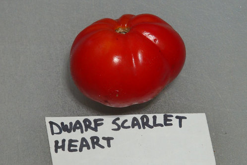 Here is the Dwarf Scarlet Heart Tomato , Solanum lycopersicum. This tomato originates from the USA and was created and stabil