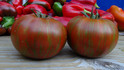 Here is the Vintage Wine Tomato, Solanum lycopersicum, This stripped tomato, is a recent introduction from Europe which has tasty fruity flavor an are good sized with a unique pale pink to dark mahogany, with beautiful golden and green stripes that are quite distinct. This Rich flavored and rare beauty makes this a new winner. It's a Potato leafed, indeterminate type plant. 75 days from transplant.