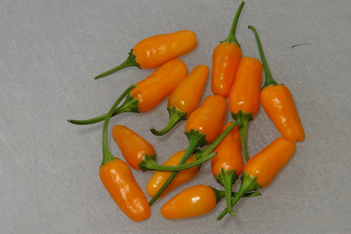 Here is the Short Yellow Tabasco Pepper, Capsicum annuum, Scoville units: 900 to 8,000 SHU. This peppers origins are unknown