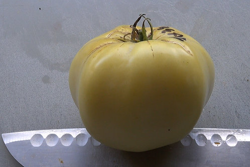 Here is the White Beauty Tomato, Solanum lycopersicum This is a very unique tomato in a few ways. The tomato is a low acid he