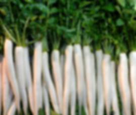 Snow White Carrot