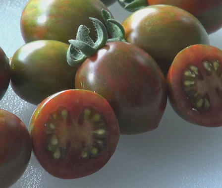Here is the Chocolate sprinkles Tomato, Solanum lycopersicum, Created by Bonnie Plants, This tomato is a hybrid and has a very unique shape! It can produce hundreds of tomatoes and about 12 per bract. this tomato reached to top of my list for best taste in 2018! Highly resistant to early and late blight. Open pollinated. Indeterminate. 50-70 days.