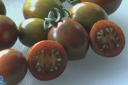 Here is the Chocolate sprinkles Tomato, Solanum lycopersicum, Created by Bonnie Plants, This tomato is a hybrid and has a ver