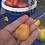 Here is the Polish Pastel Tomato, Solanum lycopersicum. This tomato originates from Woden Act, Australia and was created by J