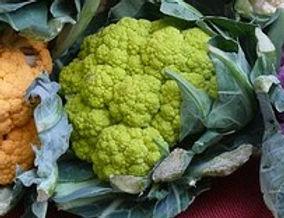 Green Macerata Cauliflower