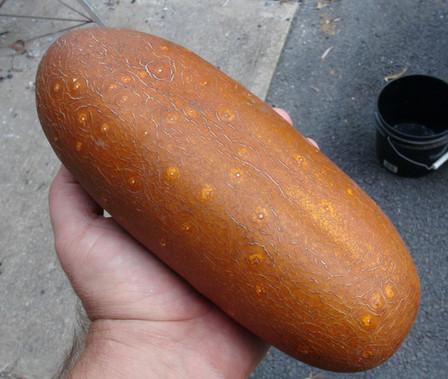 Poona Kheera Cucumber (8).JPG
