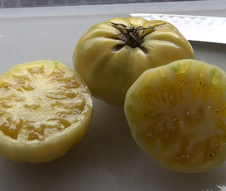 Here is the White Tomesol Tomato, Solanum lycopersicum This is a must have if you want to get into the white tomatoes. They can get 6 to 8 oz and are considered a beefsteaktype. they can range in color anywhere from a ghostly white to a beige bone in color an some times tends to get pink blushing on the bottom. Plants are very good producers for a white tomato. They were first offered by seed savers in 1998. indeterminate, Open pollinated Matures in 65 to 75 days.