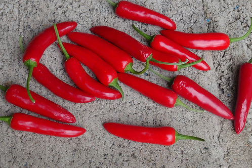 Here is the Slim Jim Jalapeno Pepper, Capsicum annuum, Scoville units: 3,000 ~ 9,000 SHU. This Jalapeno pepper differs from o