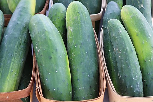 Here is the Straight Eight Cucumber, Cucumis sativus. It was an All-America winner in 1935 for an heirloom cucumber variety.