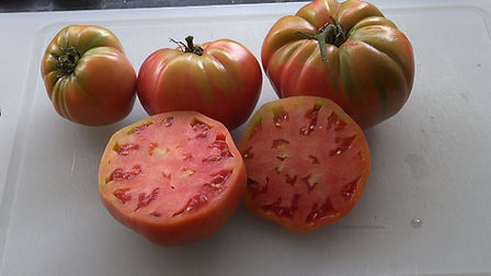 The Russian Rose Tomato originates From Novorossiyk, Russia, This Russian heirloom tomato variety is appropriately named as it bears tomatoes as pretty as a rose. A good producer of 12 to 20 oz deliciously sweet tomatoes. These tomatoes can get quite large! A favorite market tomato and will catch the eye of the passer buyer. Best to start in doors in march. Indeterminate, 75-85 days from transplant.