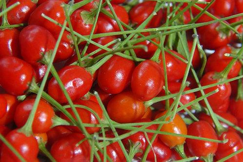 Here is the Dwarf Tepin Pepper, Capsicum annuum var. glabriusculum, Scoville units: 50,000 ~100,000 SHU. The Tepin or Chilte