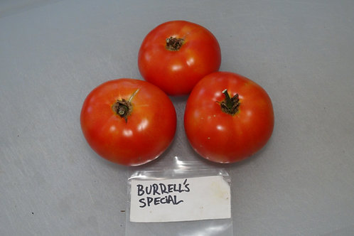 Here is the Burrell's Special Tomato, Solanum lycopersicum. This tomato originates from Rocky Ford, Colorado, USA and was cre