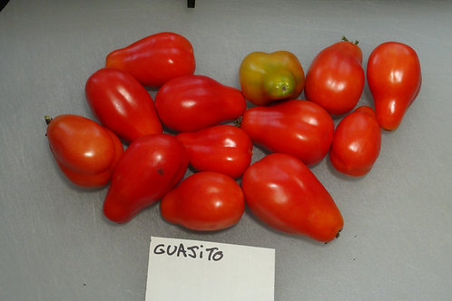 Here is the Guajito Tomato , PI 438877, Solanum lycopersicum. This tomato originates from Mexico and was first Collected on F