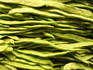 "Here is the Romano pole beans, Phaseolus vulgaris. These vines come up every year! Romano Pole Beans are also known as ""Italian Green Pod Beans"", ""Italian Flat Beans"", or ""Italian Pole Beans"". It is an old reliable variety that has been around for a long time. Many consider it a classic Italian flat gourmet bean. They are a thick, and meaty, tender, flat and string-less type of bean. Plants can grow 6 to 8 feet tall. They also produce very high yields of crispy crunchy bean pods that have a smooth flavor and get to 8 inches long but flat. For continuous harvest keep beans picked when they are young and most tender. Eat them fresh young or let them mature for drying. Open pollinated 65 to 90 days."