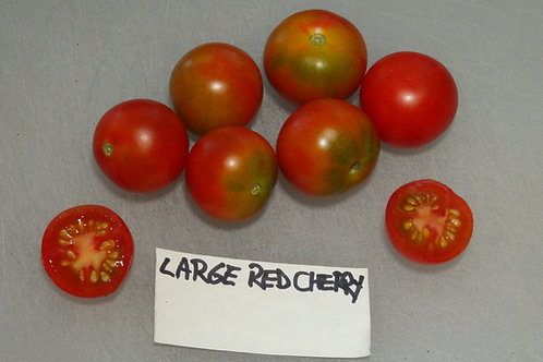 Here is the Large Red Cherry Tomato .25 cent addition, Solanum lycopersicum. The tomato originates from our gardens in New Je