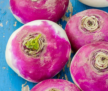 Here is the Purple Top White Globe Turnip,Brassica napobrassica. This turnip has dates back to the 1850's. It is a firm crisp white with purple top type turnip with a crisp slightly sweet flavor that goes good in any recipe. It can be eaten raw or cooked and make a great mash potato like dish. They can grow to about 3 to 5 inches and plants get to around 2 feet tall. Roots have purple shoulders and white bottoms. Tops are also edible. Flesh of roots is white, fine grained, sweet and mildly flavored.Best harvested at 3 to 4 inches round. Open pollinated 60 days.