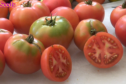 Here is the Porter Tomato, Solanum lycopersicum, PI# 270281. This tomato was developed by V. O. Porter from Porter & Son Seed