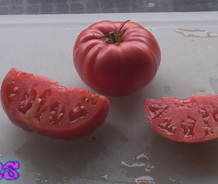 Here is the Sainte Colombe Tomato, Solanum lycopersicum. This tomato comes from the Sainte-Colombe-sur-l'Hers region of France. These deep pink tomatoes have a great balance of sweet an tangy flavor. They are fairly meaty, and are good in a salads or making sauces. Plants can get to 8 feet tall! They are a pretty good producer and makes fruits from 1/2 to 1 lb. Indeterminate open pollinated 70 days from transplant.