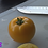 Here is the Lemon Boy Tomato, Solanum lycopersicum This is a very unique tomato in a few different ways. The seeds are very d