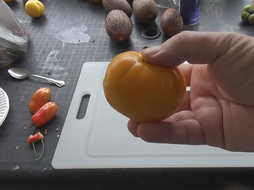 Here is the Jubilee Tomato, Solanum lycopersicum This is a very unique tomato in a few different ways. The tomato is a low ac