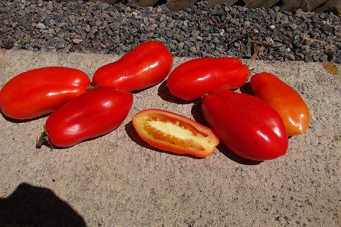 Here is the San Marzano Tomato, Solanum lycopersicum. This tomato originate from the small town of San Marzano sul Sarno, nea