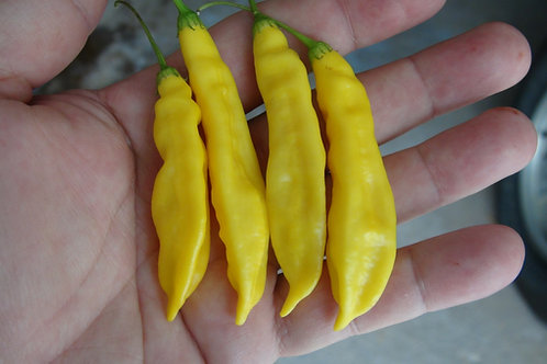 Bolivian Yellow Pepper