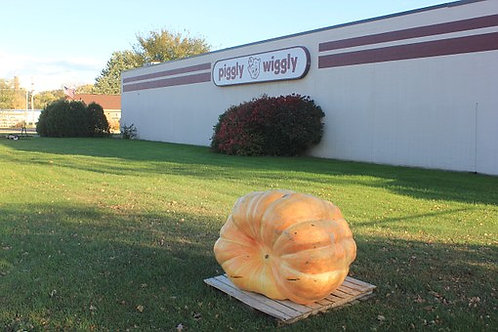 Here is the Dill's Atlantic Giant Pumpkin,Cucurbita pepo. This amazing pumpkin was Developed by Howard Dill to win a giant p