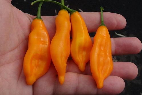 Aji Penec Orange Pepper