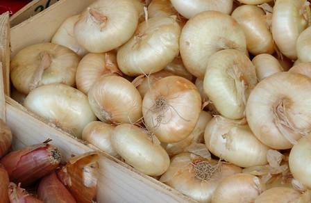 Yellow Flat Dutch Onion