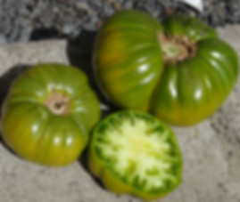 "Here is the Emerald Evergreen Tomato aka Emerald Green Tomato, Solanum lycopersicum. Introduced in 1950 by Glecklers Seedsmen, this tomato can easily get to 2 Lbs! Flavors are mild and sweet with a lime green color inside. A low-acid tomato with few seeds makes this tomato a great choice for making ""Green sauce"". Plants get quite tall with very thick stems Open pollinated. Indeterminate. 75 days."