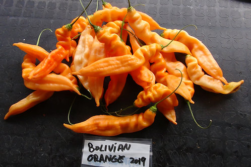 Here is the Bolivian Orange, Yellow and Cream Peppers, Capsicum baccatum, Scoville units: 2,000~ 6,000 SHU. This pepper orig