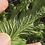 Thumbnail: Green Wave Mustard