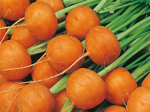 Here is the Parisienne Carrot, Daucus carota subsp. sativus. This is a round carrot and is sometimes called globe carrots. Th