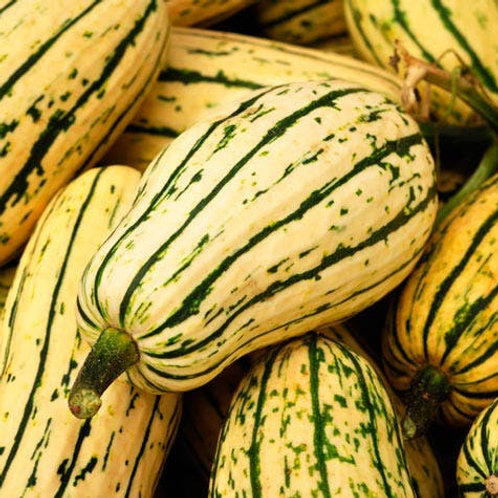 Here is the Delicata Squash,Cucurbita pepo. It is also known as the peanut squash or Bohemian squash. It was Introduced in 1