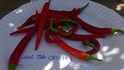 Here is the Long Thin Cayenne Pepper, Capsicum annuum, Scoville units: 20,000+ SHU. It has semi long pods about 3 inches long with a nice medium heat. It is a pretty heavy producer an can produce 100's pepper on one plant! This type of Cayenne makes perfect powder an if left on the plant they will dry an not fall off. A great choice for beginners into the world of hot peppers. Plant get to 3 feet tall, heavy producer. Open pollinated 65 days.