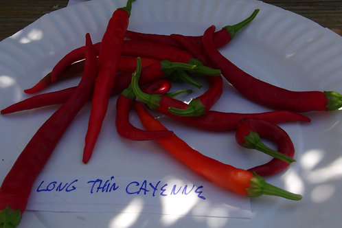 Here is the Long Thin Cayenne Pepper,Capsicum annuum, Scoville units: 20,000+ SHU. It has semi long pods about 3 inches long